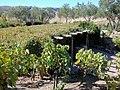 DSC24929, Viansa Vineyards & Winery, Sonoma Valley, California, USA (6133277789).jpg