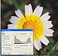 Daisy histogram.jpg