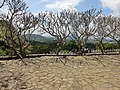 Dambulla, Sri Lanka - panoramio (61).jpg