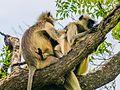 Daulatabad, Aurangabad - panoramio (37).jpg