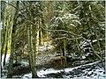 December Black Mountains Foret Noir - Master Mythos Black Forest Photography 2013 wilderness Glotter creek 1100 mtr - panoramio.jpg
