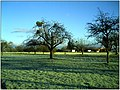 "December Frost - Master Landscape Rhine Valley 2013 Christmas ""Misteln"" - panoramio.jpg"