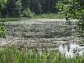 Degučių sen., Lithuania - panoramio (83).jpg