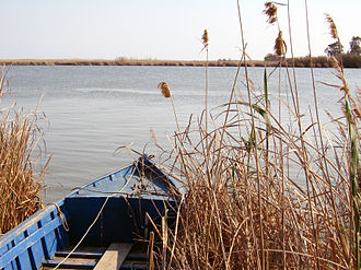 Ebro Delta - The Ebre Delta wetlands habitat.