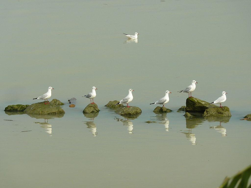 Delta del Po - Teoria di uccelli.JPG