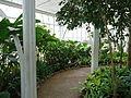 Dentro da Estufa do Jardim Botânico de Curitiba (3).jpg