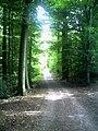 Denzlinger Wald - panoramio.jpg