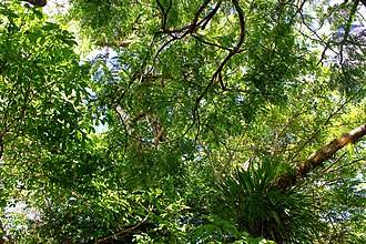 Jaú National Park - Image: Diversidade Amazônica