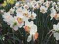 Dixon Gardens Memphis TN 2014-04-06 090.jpg