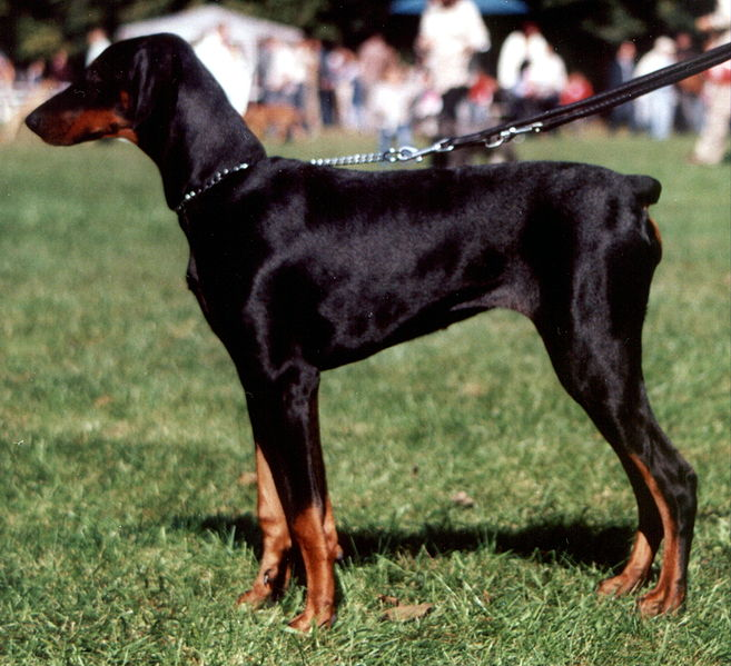 Dog Breeds Without Rear Dew Claws