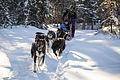 Dogsled ride at Riley Creek Campround (12713923645).jpg