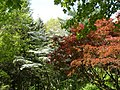 Dogwood-Japanese Maple 076.jpg