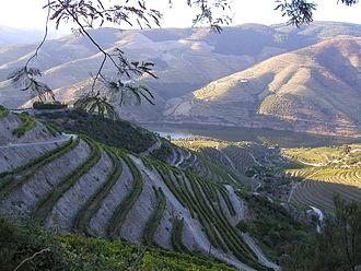 Douro (intermunicipal community) - The grape vine terraces in the Douro valley