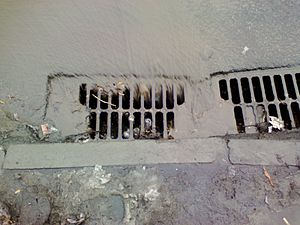 Stormwater - Urban runoff entering a storm drain