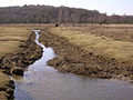 Drainage ditch on Penny Moor, New Forest - geograph.org.uk - 141954.jpg
