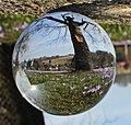 Drebacher Krokuswiesen im Glaskugel.IMG 8118WI2.jpg