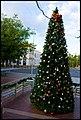 Dubbo - Christmas Tree-1+ (2151546300).jpg