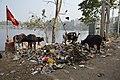 Dumped Garbage At Southern Edge - Santragachi Jheel - Howrah 2017-12-25 5667.JPG
