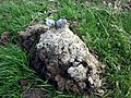 Dung on dung - geograph.org.uk - 1465346.jpg