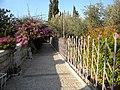 East Jerusalem, Olive Mountain (Gethsimani Garden); 11-3000-100 (4).jpg