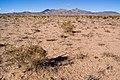 East of Cookes Range - Flickr - aspidoscelis (3).jpg