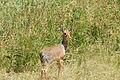 Eastern Serengeti 2012 06 01 3568 (7522703990).jpg