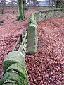 Edge of Stand Wood - geograph.org.uk - 648036.jpg