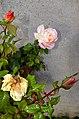 Einsiedlerhaus - Rosengarten 2012-11-04 15-01-17.JPG