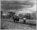 El Cerrito, San Miguel County, New Mexico. The staple crops in El Cerrito are corn, beans and alfal . . . - NARA - 521205.tif