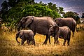 Elephant-group-2.jpg