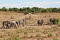 Elephants in Chobe National Park 02.jpg