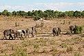 Elephants in Chobe National Park 02.jpg