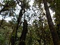 En el soto bosque - panoramio.jpg