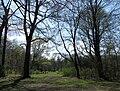 Englischer Garten Nordteil Muenchen-1.jpg