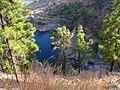 Entre pinos y plameras - panoramio.jpg