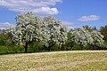 Eppingen 04-2015 - panoramio (1).jpg
