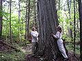 Estivant Pines.JPG