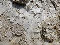 Ethiopie-Exploitation du sel au lac Karoum (8).jpg