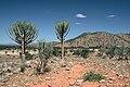 Euphorbia eduardoi.jpg