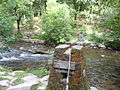 Exmoor , The River Barle and Tree Catcher - geograph.org.uk - 1496683.jpg