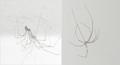 Exosquelettes d'une araignée.png