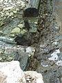 FFM Staufer-Hafen Ausgrabung 2012 l.jpg