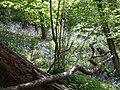 Fallen branch - panoramio.jpg