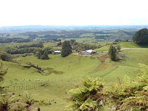 Waitomo District - A farm in the district.