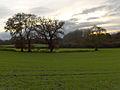 Farmland, Oare - geograph.org.uk - 282671.jpg