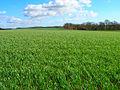 Farmland North of Boggy Wood - geograph.org.uk - 352616.jpg