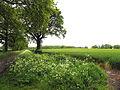 Farmland near Easton - geograph.org.uk - 12183.jpg
