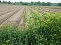 Farmland near Snape - geograph.org.uk - 177618.jpg