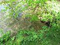 Farský rybník, buření.jpg