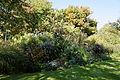 Feeringbury Manor flower herbaceous shrub border, Feering Essex England 6.jpg